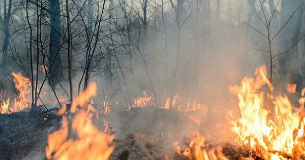 Incendio forestal en Palena