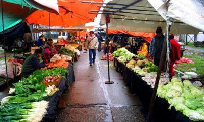 Comerciantes de Osorno