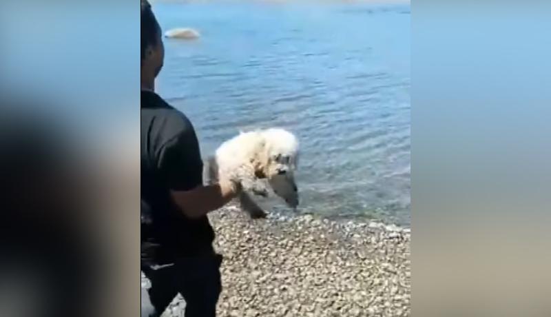 agresores del cachorro en Castro