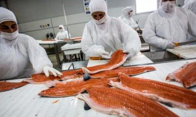 Trabajadores del salmón